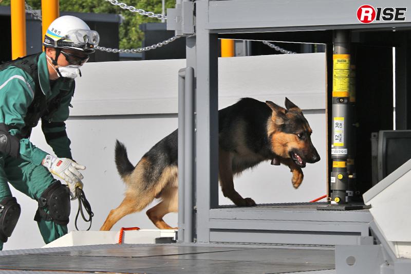 警備犬により最終的な人命検索を実施。