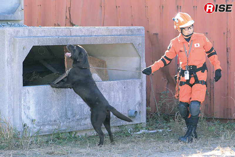 「ドッグサーチ群馬県モデル」に基づいた訓練の様子。