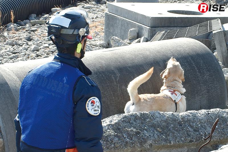 現場を共にする災害救助犬について学ぶ。