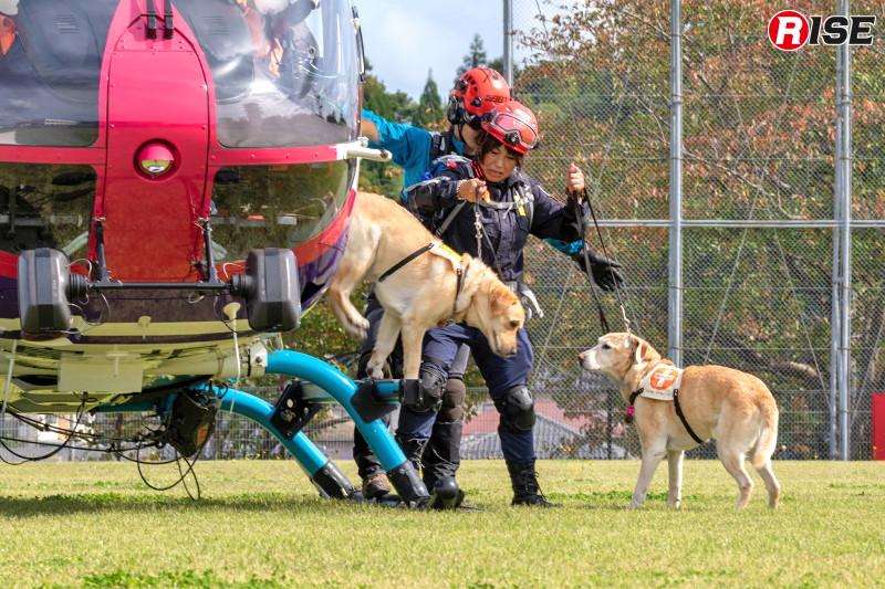 【防災ヘリ・救助犬デモンストレーション】防災ヘリによる災害救助犬投入。県内に民間災害救助犬団体がないことから、メディカルラリーを通して災害救助犬の存在を知ってもらいたいとの思いから行われている取り組み。