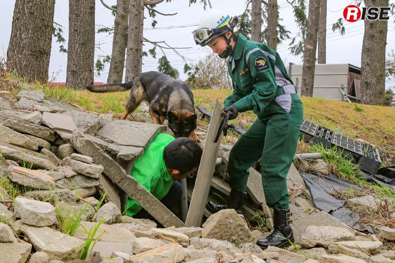 発見に対してハンドラーが褒め、要救助者役からはおもちゃをもらう。こうした喜びを原動力に犬は活動を行う。
