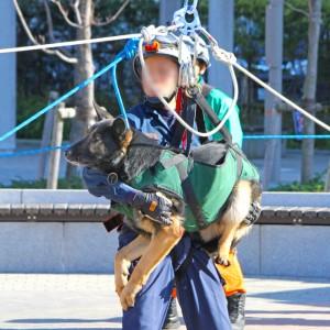 ロープによる高所進入訓練にあたる警視庁の警備犬(写真:木下慎次)