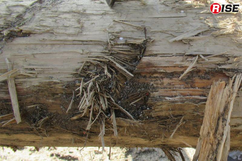 災害現場にある倒木などは表面に土砂が付着しており、これがチェーンソーの刃を痛める。