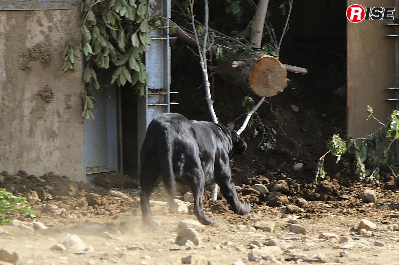 まずは警備犬によるサーチを実施。要救助者を発見する。