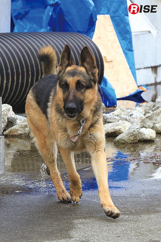 救助犬によるサーチを実施。