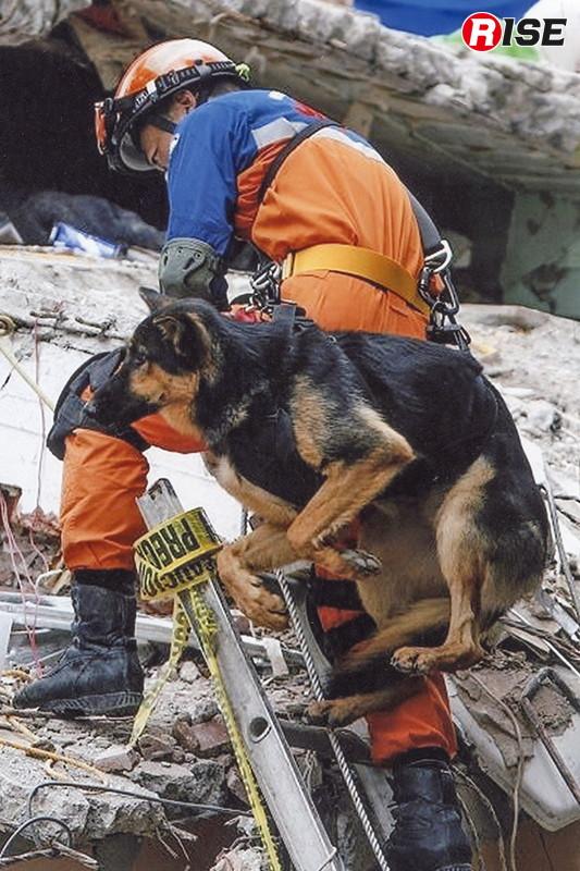ハーネスにより犬を縛着して登梯し進入を図る。(写真:警視庁)